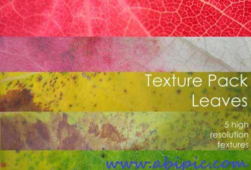 دانلود تکسچر سطح برگ Leaves - Textures Pack