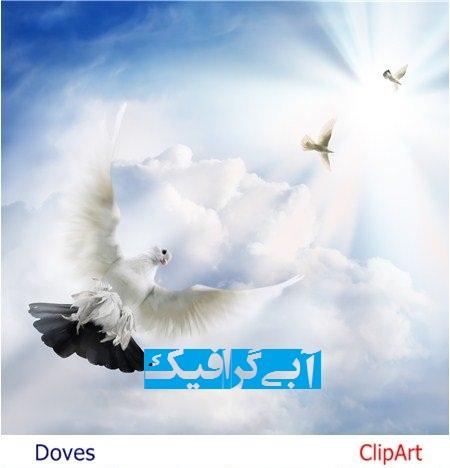 دانلود تصاویر استوک و کلیپ آرت پرواز کبوتر در آسمان