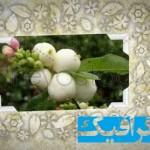 دانلود پروژه های افترافکت برای فیلم عروسی و آلبوم عکس عروسی Page HD Photo Album