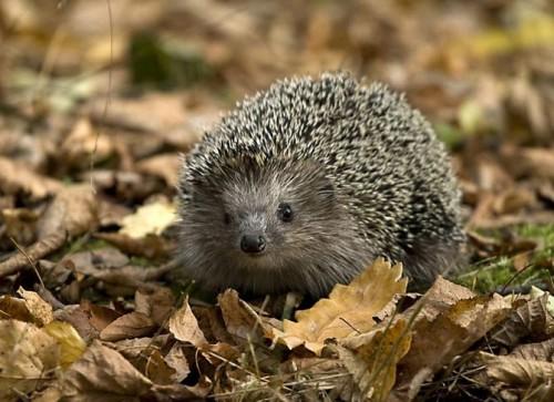 عکس های بسیار زیبا از دنیای حیوانات شماره 1