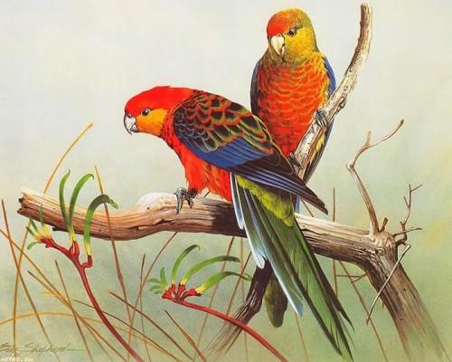 دانلود نقاشی های زیبا از پرندگان