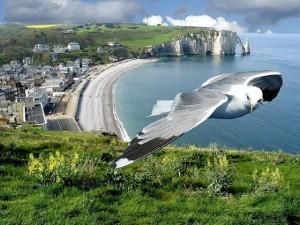 عکس کبوتر و ساحل