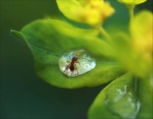 عکس مورچه، عکس قطره آب
