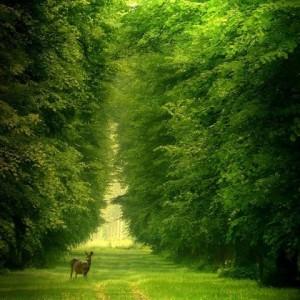 عکس طبیعت، عکس آهو در جنگل، عکس جنگل