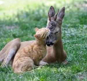 عکس گربه، عکس آهو، عکس عاشقانه حیوانات