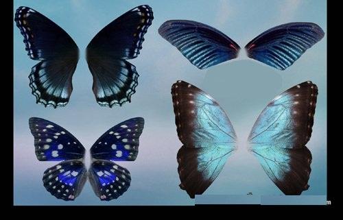 دانلود تصاویر لایه باز بال پروانه ها Butterfly wings set psd