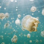 عکس عروس دریایی