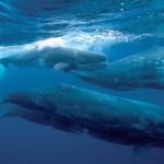 عکس نهنگ