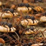 عکس مورچه