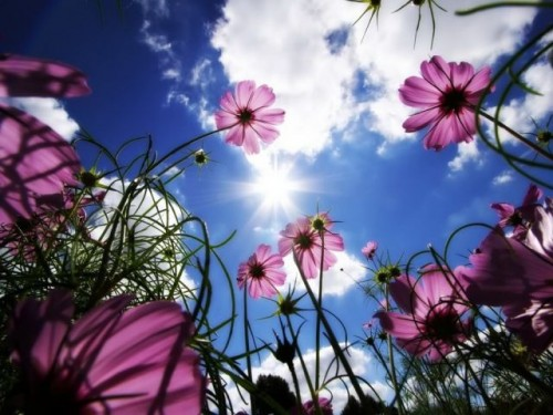 تصاویر زیبای طبیعت سری اول