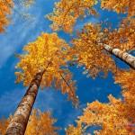 عکس های پاییز
