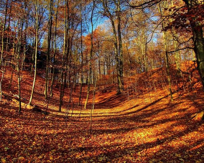 دانلود عکس فصل پاییز