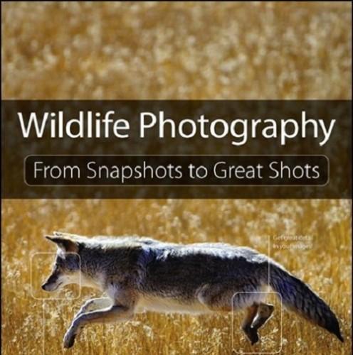 دانلود کتاب آموزش عکاسی از حیات وحش Wildlife Photography From Snapshots to Great Shots