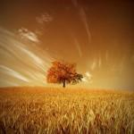 دانلود عکس های بسیار زیبا به نام درخت تنها