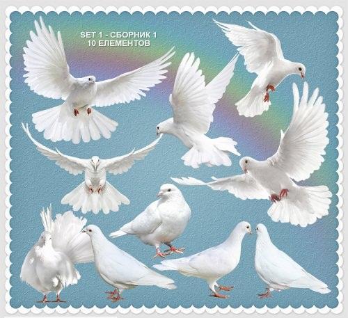 دانلود تصاویر کلیپ آرت و طرح لایه باز کبوتر  Clipart White Doves PSD