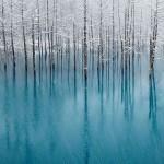 عکس جنگل در زمستان