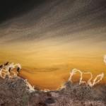عکس هوایی از حیوانات