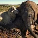 عکس دوستی های عجیب میان حیوانات سری 2