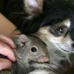عکس دوستی های عجیب میان حیوانات