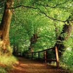تصاویری رویایی از جنگل های دنیا