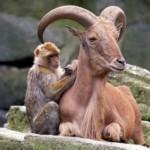 عکس دوستی های عجیب میان حیوانات سری 1