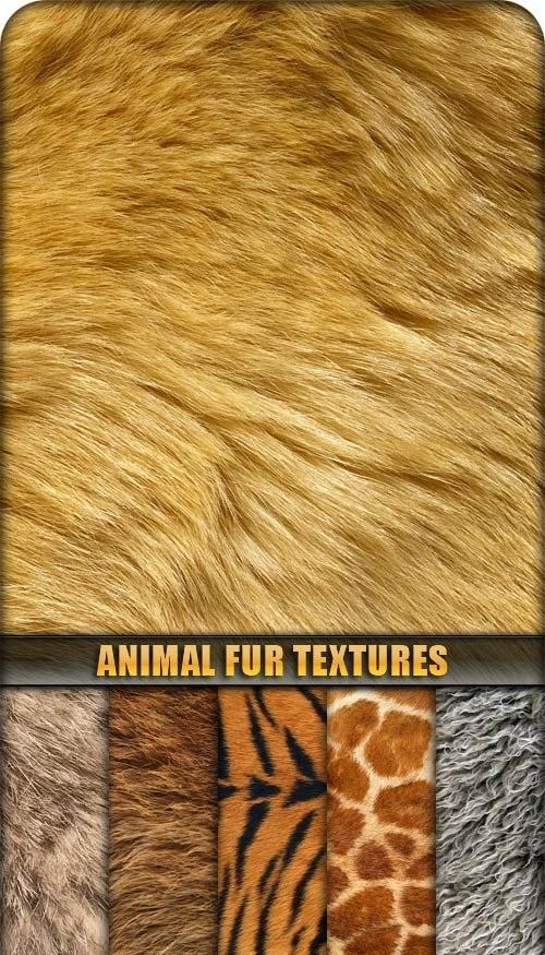 دانلود تکسچر پوست و موی حیوانات Animal Fur Textures