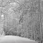 تصاویری بسیار زیبا از فصل زمستان