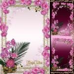 دانلود قاب و فون عکس زیبای گل ارکیده Flower Frame – Gentle Orchids
