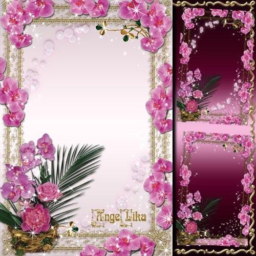دانلود قاب و فون عکس زیبای گل ارکیده Flower Frame - Gentle Orchids
