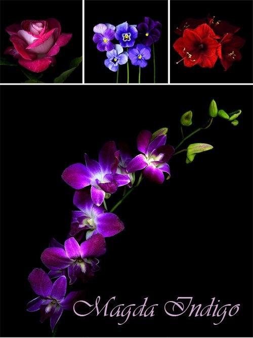 دانلود نمونه تصاویر زیبا از عکاسی از گل ها