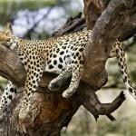 تصاویر بسیار زیبا از حیوانات در حال خواب