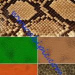 دانلود تکسچر یا بافت های با کیفت بالا از پوست مار Snake skin texture