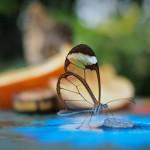 تصاویری بسیار زیبا از طبیعت شگفت انگیز