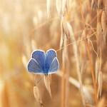 تصاویری بسیار زیبا از طبیعت