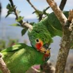 تصاویر بسیار زیبا از طوطیان عاشق