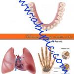 دانلود وکتور قسمت های مختلف بدن انسان Human organs vector