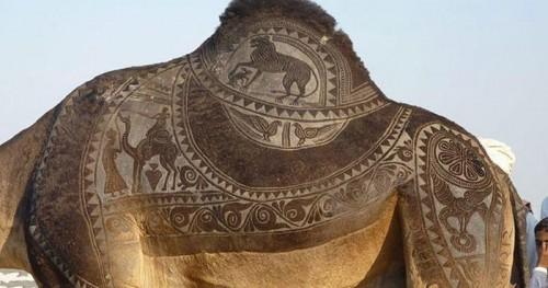 تصاویری بسیار زیبا از طراحی خلاقانه روی بدن شتر