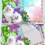 دانلود قاب عکس لایه باز با طرح گربه سفید پشمالو