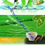 دانلود طرح لایه باز PSD چای سبز Green tea is fresh