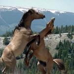 تصاویری بسیار زیبا از اسب های زیبا