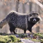 تصاویری بسیار زیبا از حیوانات