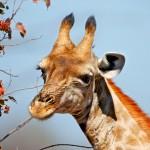 تصاویری بسیار زیبا از حیات وحش