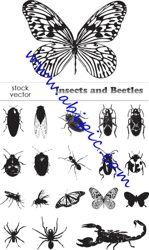 دانلود تصاویر وکتور حشرات Vectors Insects and Beetles