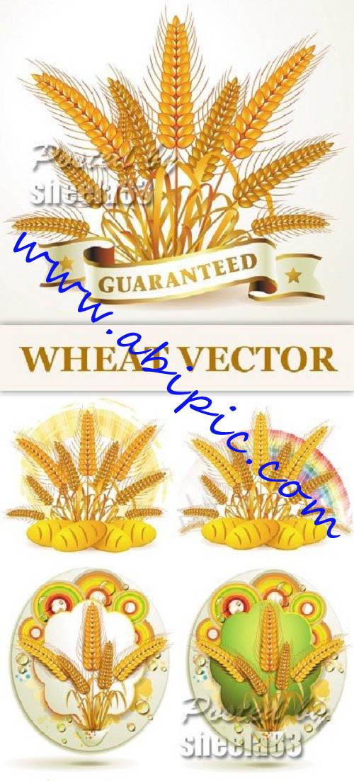 دانلود وکتور خوشه گندم | آبی گرافیک | دانلود آموزش ،گرافیک و عکسدانلود تصاویر استوک وکتور گندم Wheat Vector