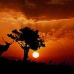 تصاویری بسیار زیبا از غروب خورشید