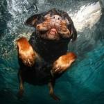 تصاویری جالب از بازی سگ ها در زیر آب