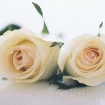 Flowers- (2)