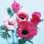 Flowers (25)