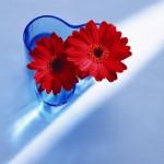 Flowers (28)