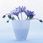 Flowers (29)